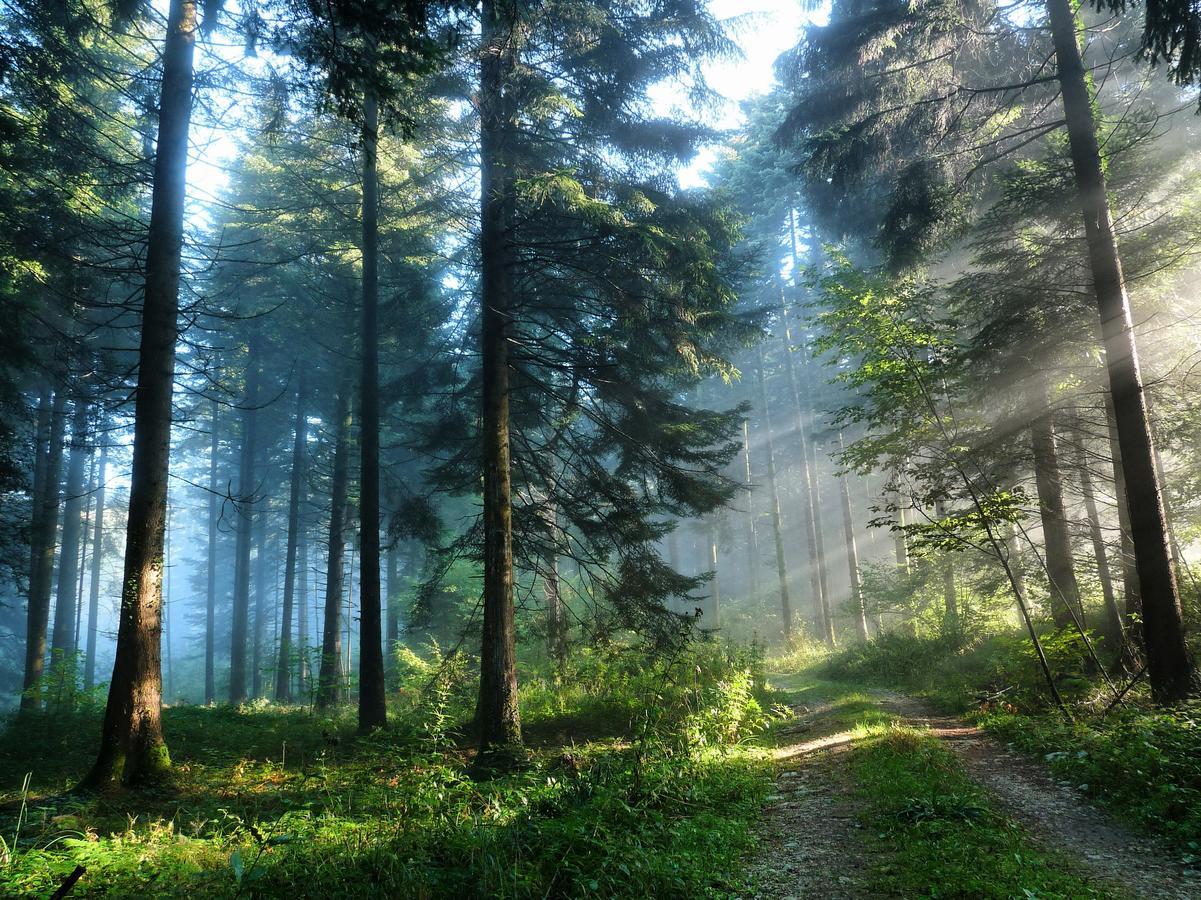 Online Vipassana in Trimurti Tsjechië